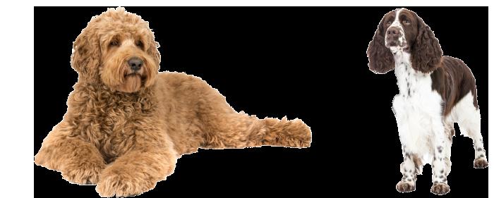 2-honden-productpagina